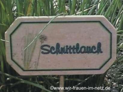 Blumenstecker Schnittlauch
