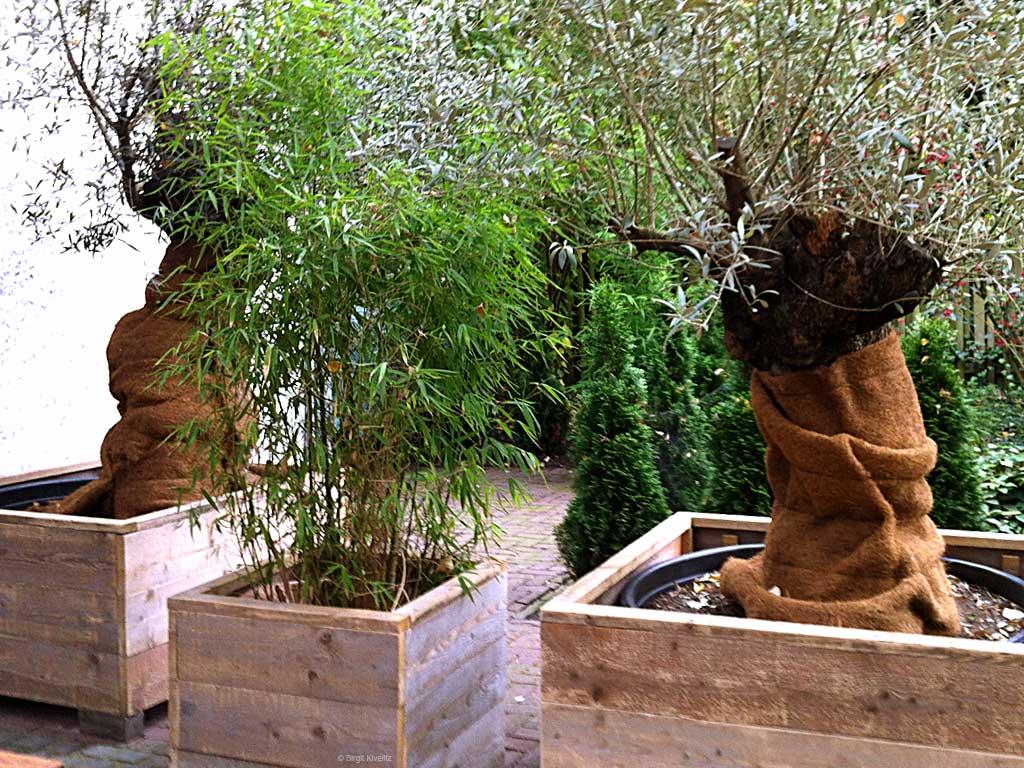 Winterschutz für Kübelpflanzen mit Jute-, Kokos- oder Nadelfilzmatten